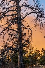 A-0906 (markbyzewski) Tags: sunrise palmerpark colorado coloradosprings tree sun cloud pikespeak mountain grass