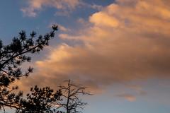 A-0904 (markbyzewski) Tags: sunrise palmerpark colorado coloradosprings tree sun cloud pikespeak mountain grass