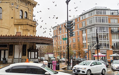 Pigeon corner (Tim Brown's Pictures) Tags: washingtondc architecture buildings urban business street streets city neighborhoods urbanrenewal renovation 14thstreet historicbuildings trafficpedestrians umbrellas rain washington dc unitedstates