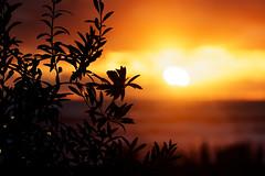 IMG_0928_hsi (Holgi_BS_63) Tags: november sunset mallorca palma