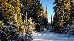 Snowy Forest Edge near Reflection Lake (rich trinter photos) Tags: mountrainiernationalpark winter packwood washington unitedstatesofamerica landscape trinterphotos northwest forest snow
