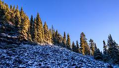 Talus Slope in Morning Light (rich trinter photos) Tags: mountrainiernationalpark winter packwood washington unitedstatesofamerica northwest trinterphotos talusslope mountains landscape