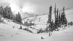 Snowy Landscape (rich trinter photos) Tags: mountrainiernationalpark winter ashford washington unitedstatesofamerica blackandwhite landscape northwest mountains alpine monochrome trinterphotos storm