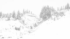 Snowy Landscape (rich trinter photos) Tags: mountrainiernationalpark winter ashford washington unitedstatesofamerica blackandwhite northwest monochrome landscape trinterphotos storm mountains alpine