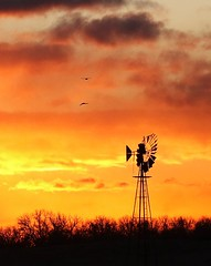 December 14, 2019 - Windmill silhouetted by sunrise. (Bill Hutchinson)