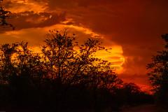 kruger_31Dec17_048.JPG (broni_1) Tags: sunset fauna nationalpark landscape flora travel family kruger limpopo southafrica