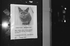 30470029 (Snap Happy 217) Tags: cat elisagieraschphotography leica lost nyc