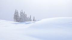 Tree Island in the Storm (rich trinter photos) Tags: mountrainiernationalpark winter ashford washington unitedstatesofamerica landscape minamal northwest alpine mountains storm trinterphotos