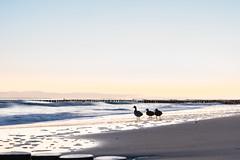 Wintermorgen (Heike_G.) Tags: ostsee usedom am morgen baltic sea