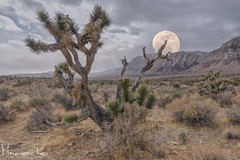 Moonrise over Red Rock (magnetic_red) Tags: moon moonrise mountains joshuatrees mojavedesert clouds sky nature nopeople composite