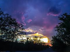 kruger_31Dec17_1949.JPG (broni_1) Tags: sunset landscape nationalpark family flora travel fauna kruger limpopo southafrica