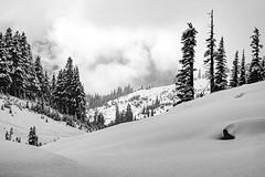 Snowy Landscape (rich trinter photos) Tags: mountrainiernationalpark winter ashford washington unitedstatesofamerica blackandwhite landscape monochrome trinterphotos northwest storm mountains alpine