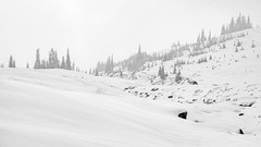 Snowy Landscape (rich trinter photos) Tags: mountrainiernationalpark winter ashford washington unitedstatesofamerica blackandwhite landscape monochrome trinterphotos mountains alpine northwest storm