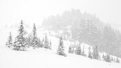 Snowy Landscape (rich trinter photos) Tags: mountrainiernationalpark winter ashford washington unitedstatesofamerica landscape trinterphotos blackandwhite mountains alpine storm monochrome northwest