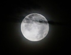 December 12, 2019 - A veiled moon. (Bill Hutchinson)