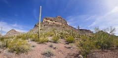 Sonoran Desert View (BongoInc) Tags: organpipecactusnationalmonument arizona sonorandesert