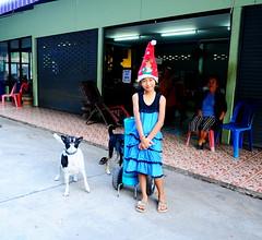 ,, Today's Helper ,, (Jon in Thailand) Tags: todayshelper myfriend 2ton2tone booboo sticklady themonkeytemple jungle santahat thaismile blue green red purple nikon nikkor d300 175528 rescueddogs dogrescue dog dogs k9 k9s