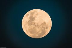 kruger_01Jan18_292.JPG (broni_1) Tags: fauna moon family flora travel nationalpark kruger limpopo southafrica
