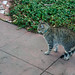 The Cats of University Heights: Charlie (the Third)