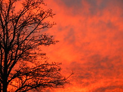50/52 -- 2019 -- Burnish [Explore 16Dec2019] (Pandora-no-hako) Tags: project52 sunset tree silhouette sky indianapolis indiana 2019 cloud