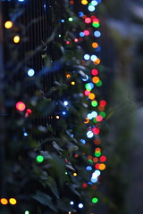 Lights (anakiwa_forever) Tags: 3652019 wellington newzealand christmas lights