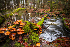 my favourite hiking trail (phlickrron) Tags: hiking landscape outdoors nature longexposure höllbachtal bavaria oberpfalz woods tree mushroom