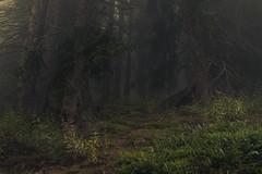 Presence of an ancient Forest (Netsrak) Tags: tree trees baum bäume wald forest woods alt ancient landscape landschaft natur nature green grün outside nikkor light licht mist fog nebel austria kleinwalsertal at alpen alps