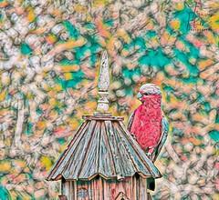 Painted Bird (Travis H) Tags: sale digitalphotography topazlabs perchingbird painting digitalphoto topaz topazstudio2