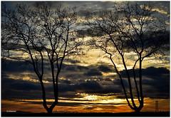 (Jehanmi) Tags: cloudporn nuages cloud ciel sky light trees arbres flickr photography nikonphotography nikon skyporn skyscape dreamscape landscapelover landscape nature paessagio paysage sunrise sunset coucherdesoleil