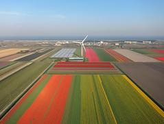 Petten-St.Maartenszee (3) (Tom Kisjes) Tags: kap nederland thenetherlands petten sintmaartenszee kernreactorenpetten bollenvelden bulbfields noordzeekust northseacoast aerial luchtfoto aerialphotography luchtfotografie