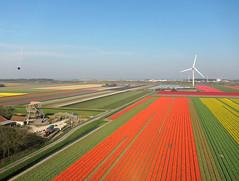 Petten-St.Maartenszee (2) (Tom Kisjes) Tags: kap nederland thenetherlands petten sintmaartenszee kernreactorenpetten bollenvelden bulbfields noordzeekust northseacoast aerial luchtfoto aerialphotography luchtfotografie