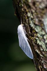 Moth (BEHP Photography) Tags: trees macro nature nikon wildlife moth micro nikkor nikond850 florida bokeh naples macrophotography wildlifephotography insect wings ngc