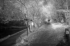 Which way? (nickym6274) Tags: stokebruerne northampton northamptonshire uk canal woodlandwalk infrared blisworthtunnel trees nikond7000