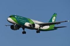 EI-DEI Airbus A320-214 EGLL 14-12-19 (MarkP51) Tags: eidei airbus a320214 a320 aerlingus ei ein irishrugby special colours london heathrow airport lhr egll england airliner aircraft airplane plane image markp51 nikon d500 sunshine sunny nikon200500f56vr