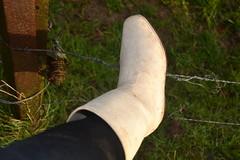339 -- White wellies from Hevea -- Rubberboots -- Gummistiefel --Hevea Regenlaarzen (HeveaFan) Tags: rubberboots rubberlaazen 在泥里的靴子橡胶 kaplaarzen ゴム長靴 gummistiefel 威灵顿长靴 stiefel stivali stövlar ブーツ dunlop hevea aigle ripped wornout rainboots regenlaarzen wellies bottes wellworn caoutchouc galoshes wreckled trashed regenstiefel waterlaarzen soles loch leaky damaged trouée undicht versleten laarzen wellington kaput mud boue fertig riss gomma trou abgelatscht kaputt lek gumboots boots bottas vredesteinlaarzen vredesteinwellies vredesteinstiefel