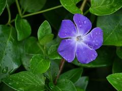 Flower (bourdieu_boy) Tags: flower leaves panasonic gx9 45150mm