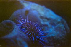 (Just A Stray Cat) Tags: centuria 800 expired ripley ripleys aquarium toronto ontario canada 35mm 35 mm film analog analogue mju mjuii ii olympus stylus epic