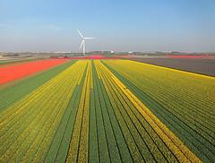Petten-St.Maartenszee (Tom Kisjes) Tags: kap nederland thenetherlands petten sintmaartenszee kernreactorenpetten bollenvelden bulbfields noordzeekust northseacoast aerial luchtfoto aerialphotography luchtfotografie