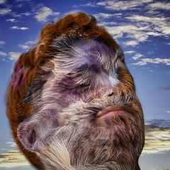 Portrait - Retrato (COLINA PACO) Tags: retrato ritratto portrait fotomanipulación fotomontaje photomanipulation kafkian franciscocolina