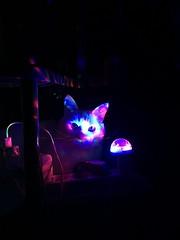 cat (vertkran) Tags: lights night neon california usa cat