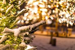 pre-Christmas (nicolasheinzelmann) Tags: morgen kleineschanze schnee ersterschnee 2019 freitagder13 lichter bundesgasse weihnachtsbaum tannenbaum bokeh dof firstsnow snow snowy morning stadt bern hauptstadt canoneos5dmarkiv 5dmkiv 5dmiv canonef50mmf12lusm color colorful dslr lights switzerland winter capital city digital flickr 13dezember2019 dezember december nicolasheinzelmann