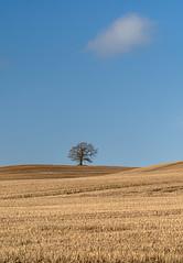 Wandered Lonely as a Cloud (jactoll) Tags: warwickshire lonetreehill lonetree lonecloud winter landscape cloud sony a7iii 70200mmf4 jactoll