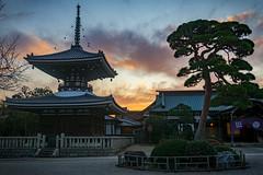 Gokokuji at sunset (tokyobogue) Tags: tokyo japan ikebukuro nikon nikond7100 d7100 sigma sigma1750mmexdcoshsm autumn gokokuji gokokujitemple sunset dusk hdr temple buddhist