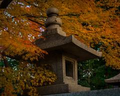 Stone lantern & momiji (tokyobogue) Tags: tokyo japan ikebukuro nikon nikond7100 d7100 sigma sigma1750mmexdcoshsm autumn leaves colours momiji gokokuji gokokujitemple lantern stonelantern