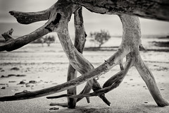 Point Charles Perspective (claustral) Tags: tree wood frame beach coxpeninsula mangrove bw monochrome nt australia coast i500 interestingness126 explore20191216