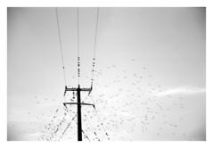 ... (irgendwiejuna) Tags: yashica yashicaelectro35gs 35mm analog corse corsica birds nopeople sky 2018 blackandwhite
