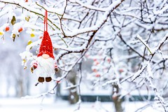 Just Hangin' Out (Karen_Chappell) Tags: noel xmas christmas gnome santa decor decoration white red snow snowing snowy winter tree nfld newfoundland stjohns branches december ornament cute santaclaus weather canonef24105mmf4lisusm holiday