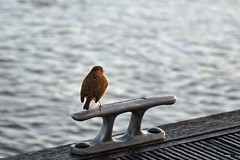 Sittin on the dock of the bay (Barry Potter (EdenMedia)) Tags: barrypotter edenmedia nikon d7200 nikkor
