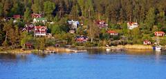 Dappled (TablinumCarlson) Tags: eu europe europa sweden insel island leica dlux seabalticschäreschärenskärstockholmer schärengartenstockholm archipelago skerry ostsee balticsea baltic schweden schäre stockholm living scandinavia skandinavien