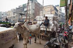8H5A2701 (vsokolovru) Tags: india delhi november 2019 streetlife streetphotography sikh muslim tea mughal